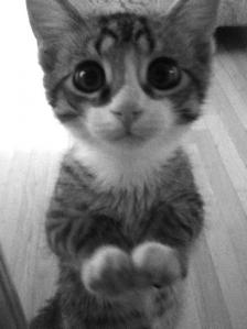 Adorable-Begging-Kitten